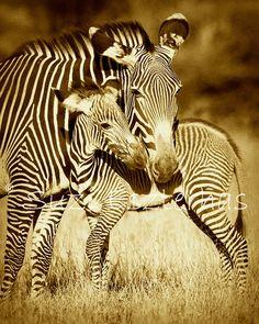 wildlife+photos+mom+and+baby | MOM Photo- 8 X 10 Sepia Print - Baby Animal Photograph, Wall, Wildlife ...