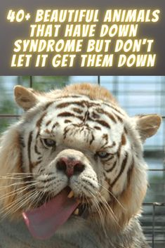 """This may come as a surprise to you, but humans aren't the only species to have Down syndrome. All sorts of animals can be affected, and they are so completely adorable. The nucleus in a typical human cell is made of 23 pairs of chromosomes. According to the National Down Syndrome Society, """"Down syndrome (also known as trisomy 21) occurs when an individual has a full or partial extra copy of chromosome 21."""" Although many animals have a different number of chromosomes in their nuclei, an extra… Cute Bedroom Decor, Celebrity Wigs, Blonde Hair Makeup, Couples Vacation, Aesthetic Indie, Down Syndrome, Funny Animal Memes, Earmuffs, Cute Gif"""