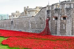 """An art installation at the Tower of London, """"Blood Swept Lands and Seas of Red"""" by ceramic artist Paul Cummins, marks 100 years since Britain's involvement in the First World War."""