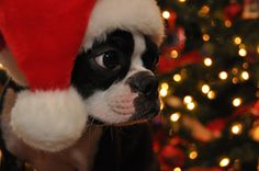 Im so doing this to dexter this christmas! :))