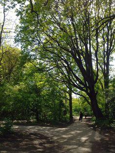 Hampstead Heath - Londres, Reino Unido (London, UK) - iPhone 4S & Camera+ Copyright © Juan Hernandez Orea