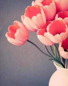 Fine art botanical photography print of orange tulips in a white vase