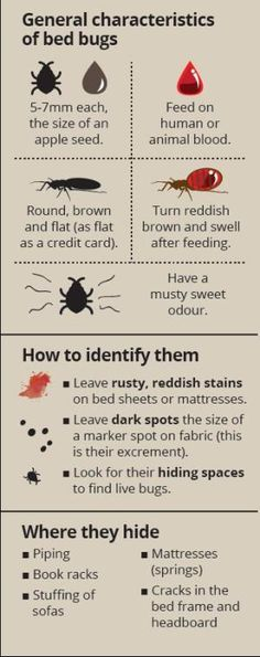 41 Best Bed Bug Infographic Images Bed Bugs Bed Bugs Treatment