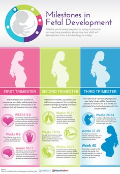 Your baby and body during each stage of fetal development. - Your baby and body during each stage of fetal development. Pregnancy Chart, Pregnancy First Trimester, Pregnancy Guide, Trimesters Of Pregnancy, Pregnancy Stages, Pregnancy Health, Third Trimester, Early Pregnancy, Pregnancy Timeline