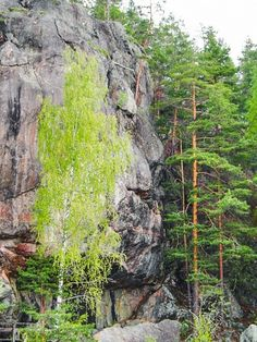 Anthropomorphic rock formation in Astuvansalmi, Finland. Plenty or rock art has been found from the surrounding area as well. Ice Sheet, One Summer, Pet Rocks, Stone Age, Natural Wonders, Rock Art, The Rock, Painted Rocks, Denmark