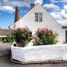 Rosegarden in Sandvig in Summer, Bornholm. #bornholm #sandvig #summer #roses #denmark #danmark #dänemark