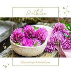 Plant Design, Herbal Medicine, Holiday Parties, Gardening Tips, Earthy, Natural Remedies, Herbalism, Flowers, Diy