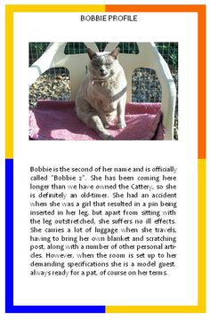Bobbie's profile and hilarious cat sleeping positions