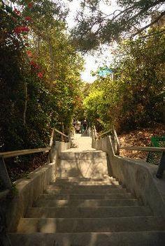 Thousand Steps, Laguna Beach, CA. The bottom? It leads straight to the beach. I've been here plenty. Laguna Niguel California, California Tours, 1000 Steps Laguna Beach, Thousand Steps Beach, Places To See, Trip Advisor, Beautiful Places, Scenery, Nature