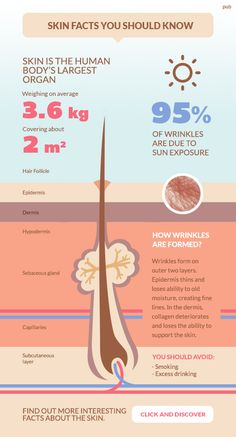 Infographic showing some skin facts: skin anatomy, how the sun affects the skin. Made as an internet ad, the goal was to drive people to the site of a