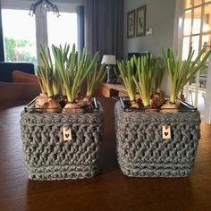 Accubakjes omgehaakt, naar idee van @miriamcatshoek in het boek @craftdates. Ik vind ze superleuk geworden! Met labeltjes van @dehaakfabriek #craftdates #myboshi #dehaakfabriek #action #blauwedruifjes #lente #cadeautje #present #creative #handmade #haken #crochet #crochetlove #crochetersofinstagram #hakenisleuk #hakeniship #homesweethome