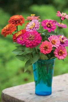 All the best shorter, smaller-flowered zinnias for masses of zingy, punchy, fabulous flowers. This collection includes: 'Sprite Mix', 'Zahara Fire' and 'Uptown Pink Champagne'. Zinnia Bouquet, Small Flowers, Fresh Flowers, Beautiful Flowers, Summer Flowers, Flower Vases, Flower Pots, Ikebana, Zinnia Elegans