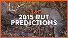 The #whitetail rut is supposed to be early and intense this year!  Find out when you need to be in your stand. WATCH: http://community.deergear.com/the-hunt/2015-rut-predictions/