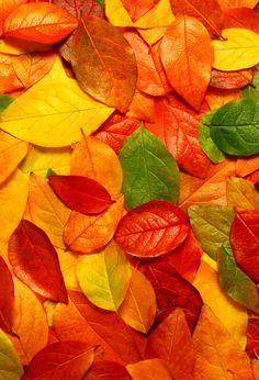 Autumn Leaves - just amazing