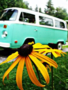 Hippie vans and flowers:) OMG! My bus and my fave flower! I must be the hippie! lol