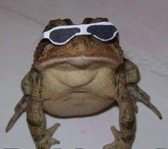 This insanely cool frog Baby Animals, Funny Animals, Cute Animals, Cute Memes, Funny Memes, Funny Humour, Funny Shit, Amphibians, Reptiles