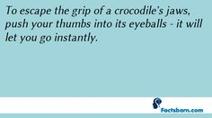 Interesting Fact About Crocodile