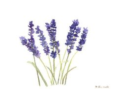 Lavender art original watercolour painting lavender by artbymonika
