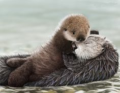 Sea Otter Pup hugs Mom