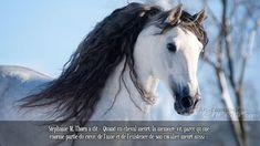 Stéphanie M. Thorn a dit « Quand un cheval meurt, la mémoire vit, parce qu'une énorme partie du cœur, de l'âme et de l'existence de son cavalier meurt aussi ». Dressage, Equestrian Quotes, Eye Quotes, Eye Sketch, Eye Painting, Andalusian Horse, Eye Photography, Pretty Horses, Horse Riding