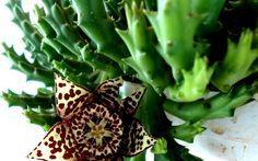 Συμβουλές για όμορφα Παχύφυτα | ekriti Greek Flowers, Tree Forest, Flowering Trees, Diy And Crafts, Home And Garden, Backyard, Fruit, Plants, Balcony Ideas
