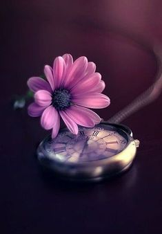 I Create Magical Images With My Old Lantern Flower Phone Wallpaper, Butterfly Wallpaper, Cute Wallpaper Backgrounds, Cellphone Wallpaper, Flower Backgrounds, Colorful Wallpaper, Beautiful Flowers Wallpapers, Beautiful Nature Wallpaper, Pretty Wallpapers