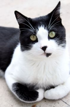 Unusual Cat Breeds or different kinds of cats. There so many different adjectives are used for describing these creatures, but some cats look very weird. Cute Cats And Kittens, I Love Cats, Crazy Cats, Cool Cats, Kittens Cutest, Pretty Cats, Beautiful Cats, Animals Beautiful, Cute Animals