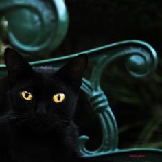Cat's Style( Black cat on green) (by Mario Curci (Satreviè))