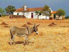 The Beautiful Country, Beautiful Places, Santiago Do Cacem, Portuguese Culture, Photo Images, Visit Portugal, Azores, Algarve, Nature Pictures