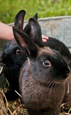 Petting Baby Bunnies