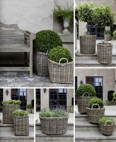 Dove grey wicker baskets with topiary plants and boxwood .