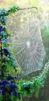 ...creation, that's what spider webs remind me of