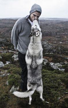 Siberian Husky.