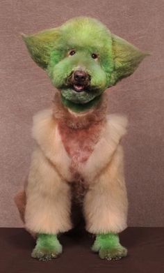 Yoda - Dogs Outlandishly Dyed and Groomed to Look Like Fictional Characters & Wild Animals