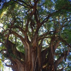 Buddha Seeds (themoonphase:   Spirituality and Earth)