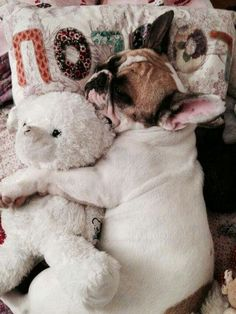 Everybody needs a friend, even a Frenchie.