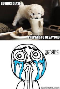 Memes en español - Buenos días! prepare tu desayuno
