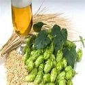 Homebrew Beer Recipes