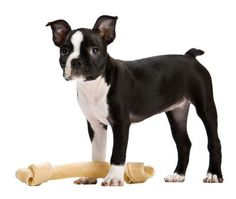 Recommended Dog Foods for Boston Terriers