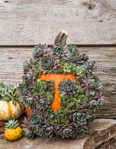 Succulent monogram pumpkin
