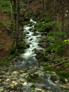 Forest creek by Maria Bruscha on 500px