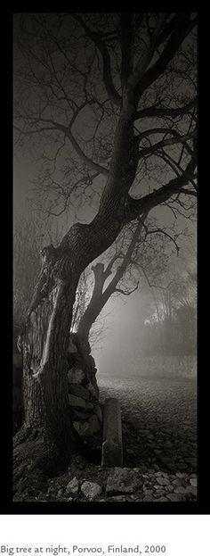Kristoffer Albrecht, Big Tree at Night, Porvoo, Finland, 2000