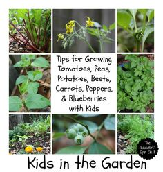 The Educators' Spin On It: April Gardening
