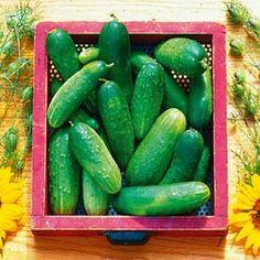 DRUVGURKA 'Double Yield' i gruppen Grönsaksväxter / Fruktgrönsaker / Gurka hos Impecta Fröhandel (9137)