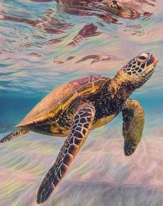 Try it out and turn your photos into a famous painting, do you want to compete with me? Baby Sea Turtles, Cute Turtles, Sea Turtle Pictures, Maui Pictures, Underwater Animals, Turtle Love, Ocean Creatures, Animal Wallpaper, Cute Baby Animals