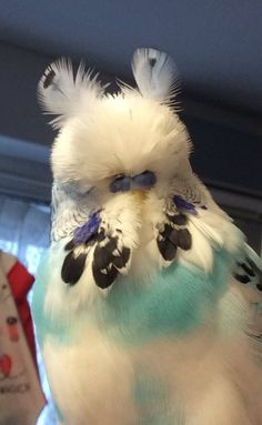 Nature sounds: Parakeets Singing, Talking, Chirping, kissing each other. Budgies talking to each other. Funny Birds, Cute Birds, Pretty Birds, Beautiful Birds, Animals Beautiful, Pretty Animals, Cute Little Animals, Cute Funny Animals, Bird Pictures