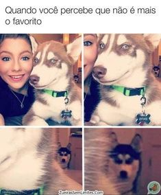 50 Funny Husky Memes That Will Keep You Laughing For Hours - Funny Husky Meme - Funny Husky Quote - The post 50 Funny Husky Memes That Will Keep You Laughing For Hours appeared first on Gag Dad. Husky Humor, Funny Husky Meme, Dog Quotes Funny, Stupid Funny Memes, Funny Dogs, Funny Animals, Cute Animals, Hilarious, Memes Humor