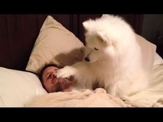 Cute Dogs Waking Up Owners - If You Laugh You Lose Funny Dogs Compilation -  #dog #dogs #funnydogs #puppy #doglover #animals #animal #pet #cute #pets #animales #tagsforlikes Watch how dogs want to wake up their owners because they want to play or eat or something. Aren't they cute 😉 Hope you like our compilation about cute puppies and kitties, please share it and S... - #Dogs