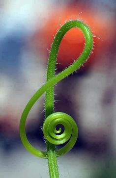 nature music note plant