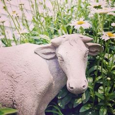 Loving our Estate Cow Statue in the midst of Meg's blooming garden!  #decoratingideas #gardendecor